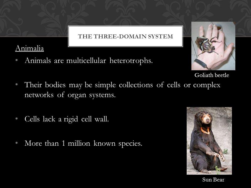 THE THREE-DOMAIN SYSTEM Animalia Animals are multicellular heterotrophs.