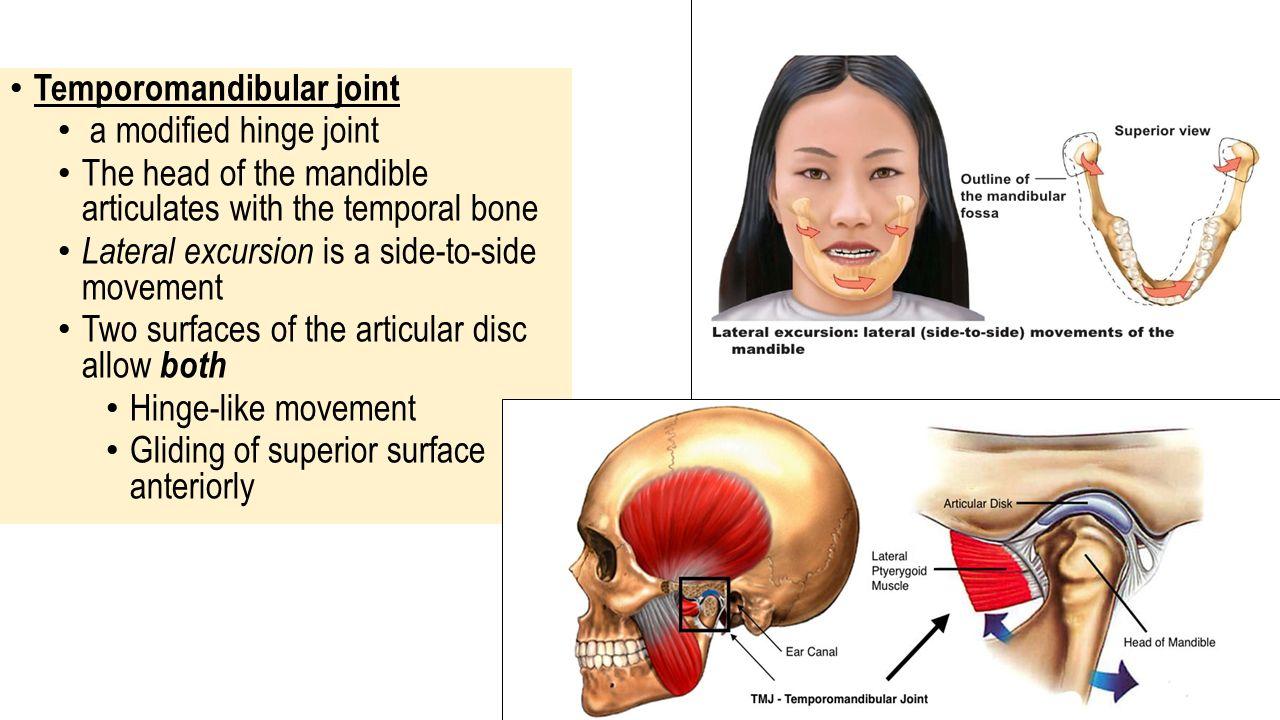 Temporomandibular joint anatomy 5072325 - follow4more.info