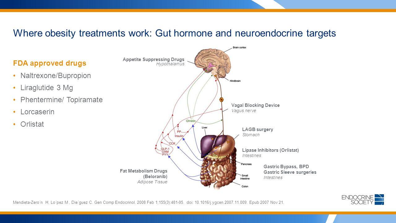 Where obesity treatments work: Gut hormone and neuroendocrine targets FDA approved drugs Naltrexone/Bupropion Liraglutide 3 Mg Phentermine/ Topiramate Lorcaserin Orlistat Mendieta-Zero´n H, Lo´pez M, Die´guez C.