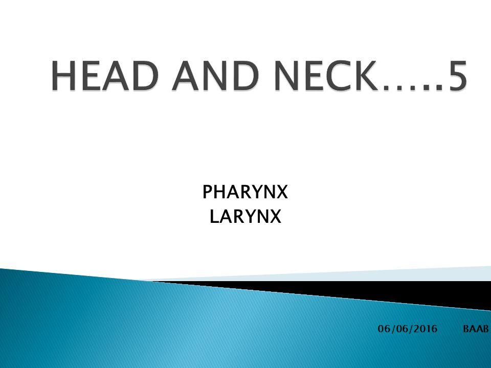 PHARYNX LARYNX 06/06/2016 BAAB.  The pharynx (plural: pharynges ...