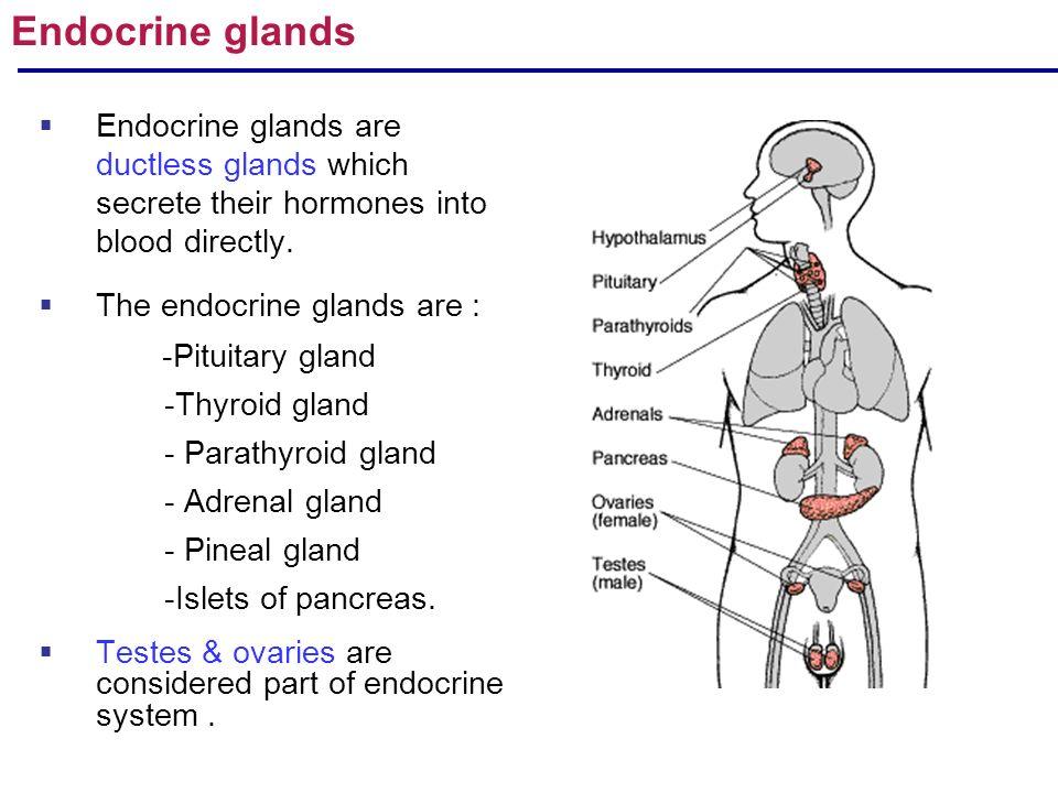 R.Arulmoli Gross anatomy of Endocrine glands: Pituitary,adrenal ...