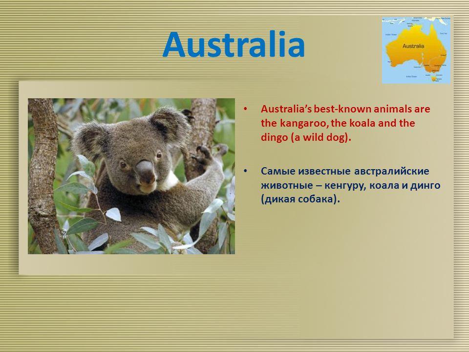 Australia Australia's best-known animals are the kangaroo, the koala and the dingo (a wild dog).