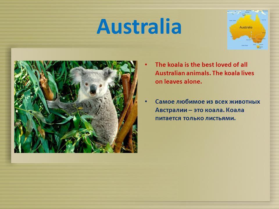 Australia The koala is the best loved of all Australian animals.