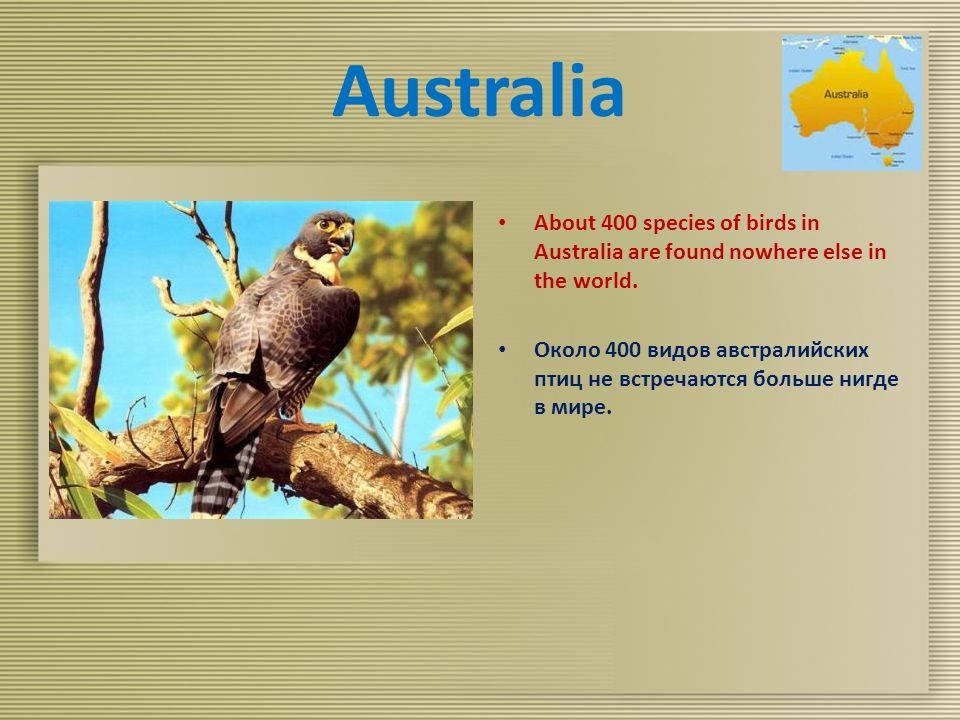 Australia About 400 species of birds in Australia are found nowhere else in the world.