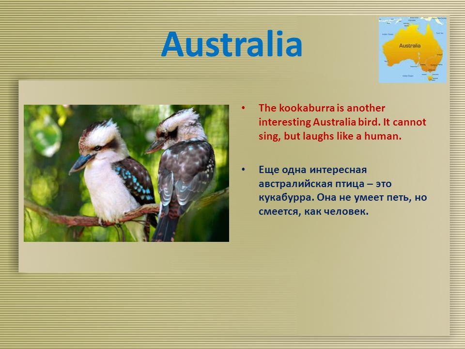 Australia The kookaburra is another interesting Australia bird.