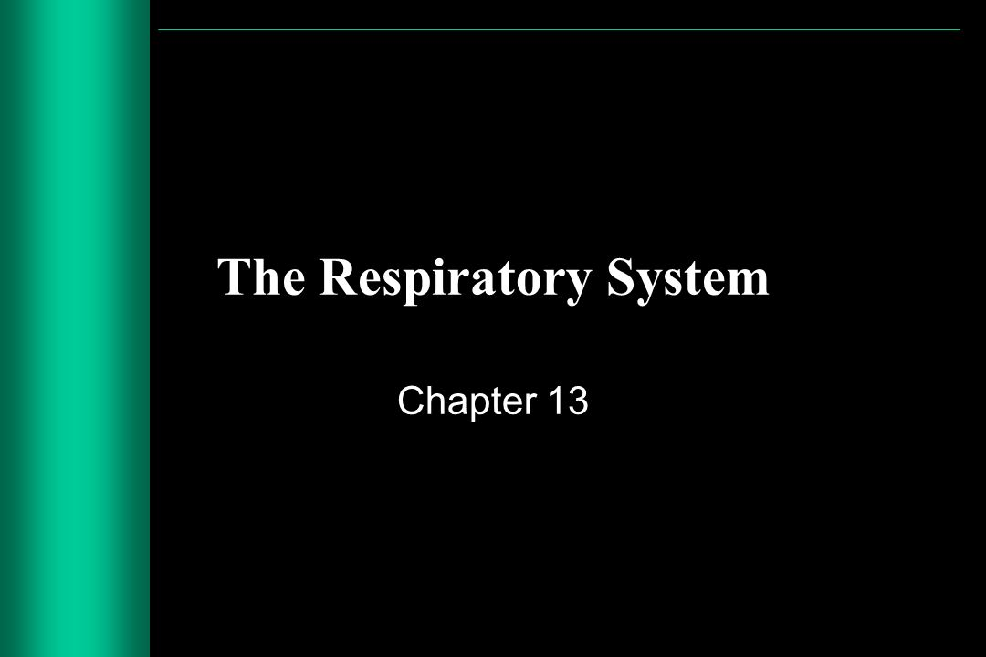 slide_1 the respiratory system chapter 13 functional anatomy of the dead space 3 chapter 13 fuse box at nearapp.co