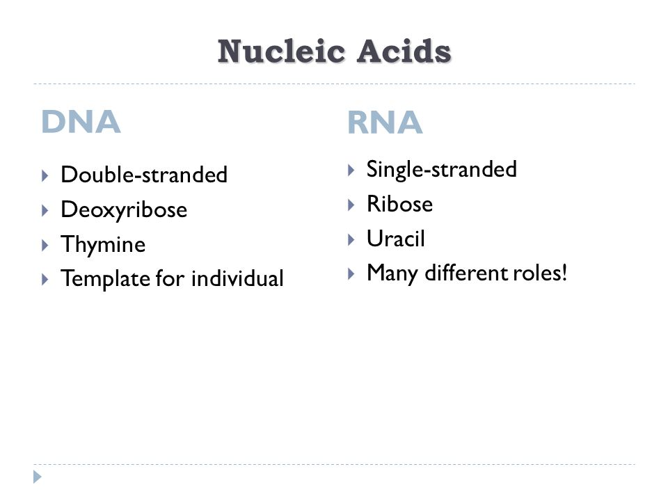 Chapter 17 Pre Lecture Assignment 1 Compare and contrast DNA to – Replication Transcription Translation Worksheet