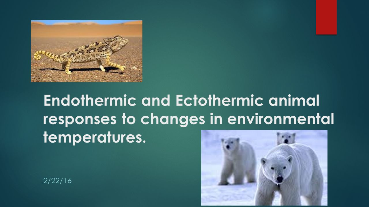 an analysis of adaptions on ectothermic and endothermic animals to extreme climates Adaptions in ectothermic and endothermic animals to extreme climates essays first of all we need to understand what ectothermic and endothermic animals are animals differ in their abilities to regulate body temperature (thermoregulation).