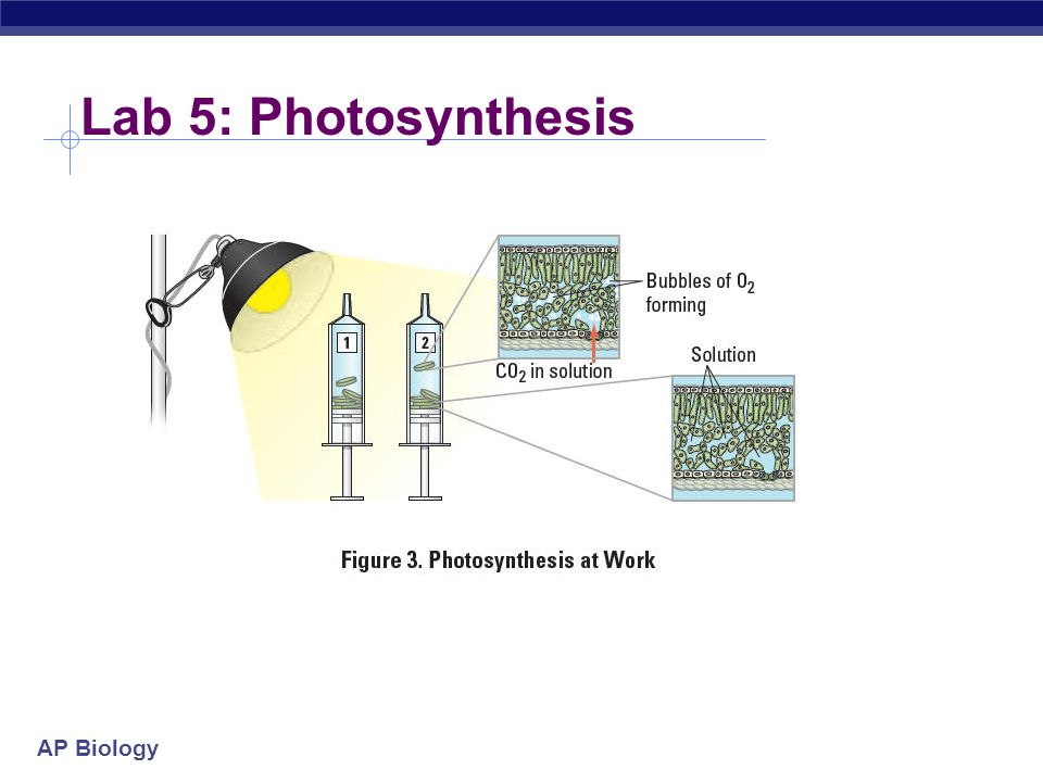 lab report on photosynthesis Revised fall 2011 1 photosynthesis lab  before coming to lab:  1) use your textbook to review chloroplast structure and photosynthesis 2) read this handout - there may be a quiz.