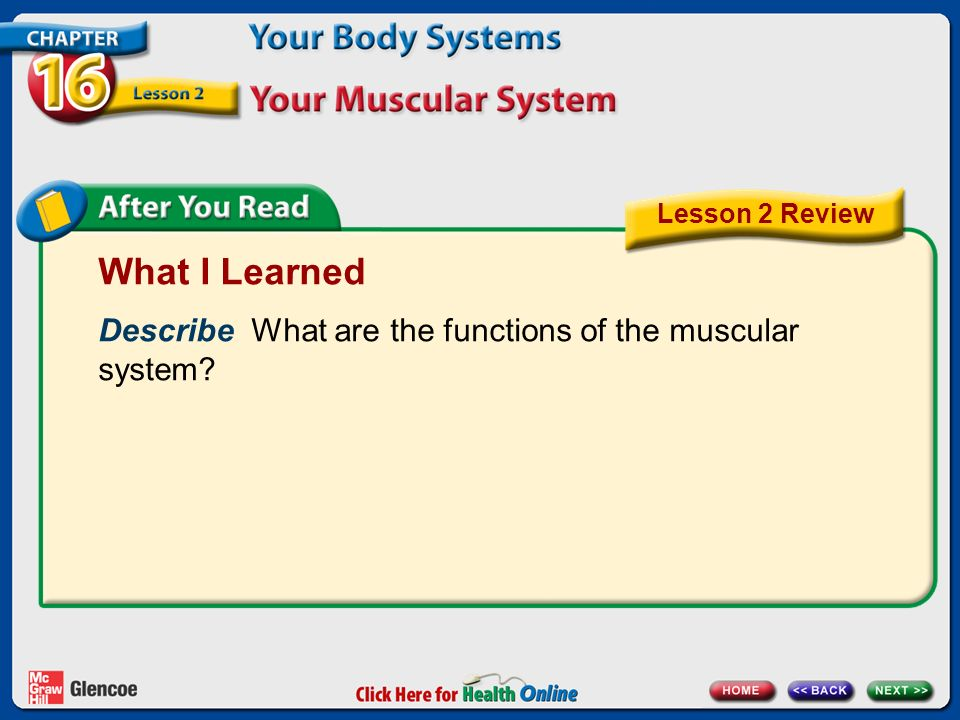 chapter 16 your body systems lesson 2 your muscular system next, Muscles