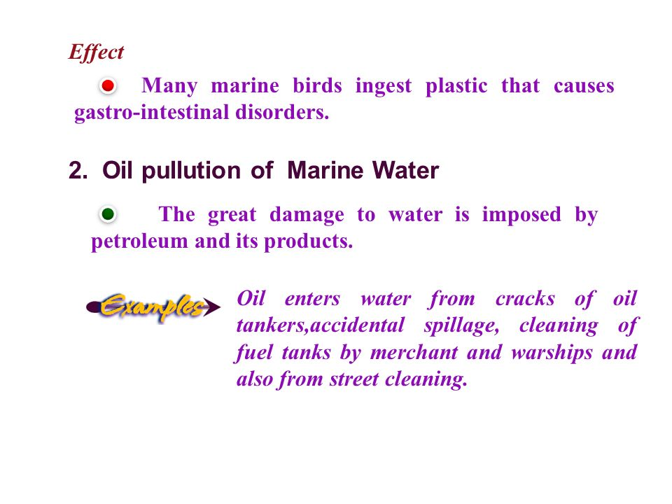 Effect Many marine birds ingest plastic that causes gastro-intestinal disorders.
