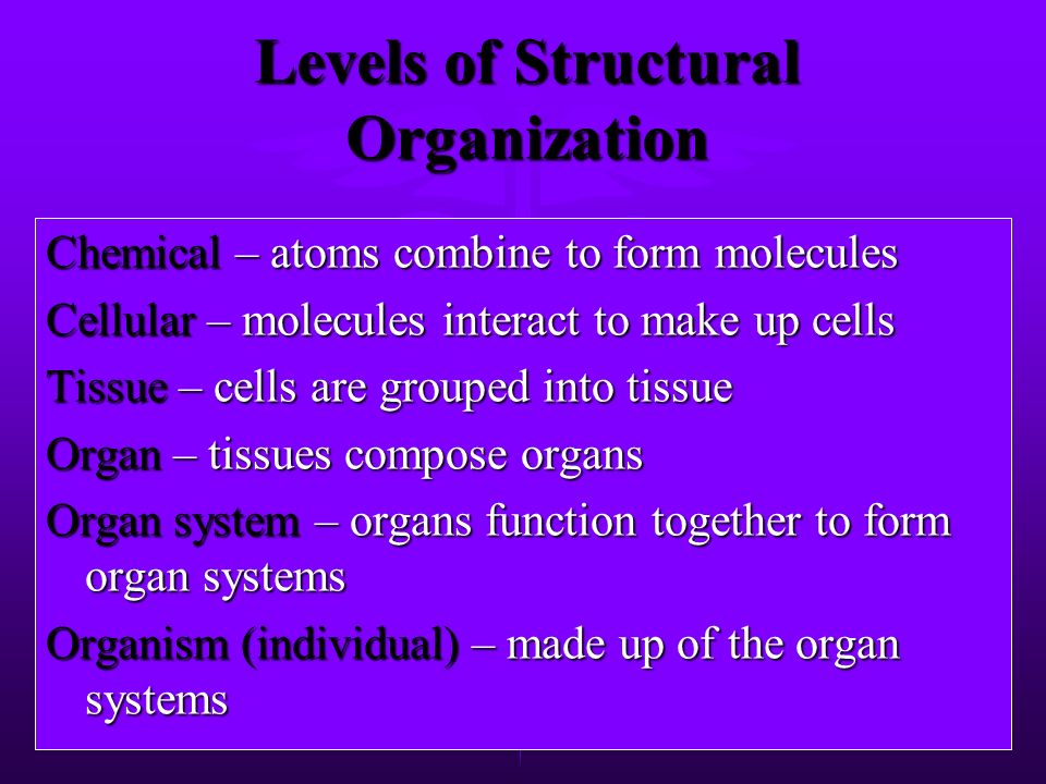 Human Body Systems By Alan Robbins. Levels of Structural ...
