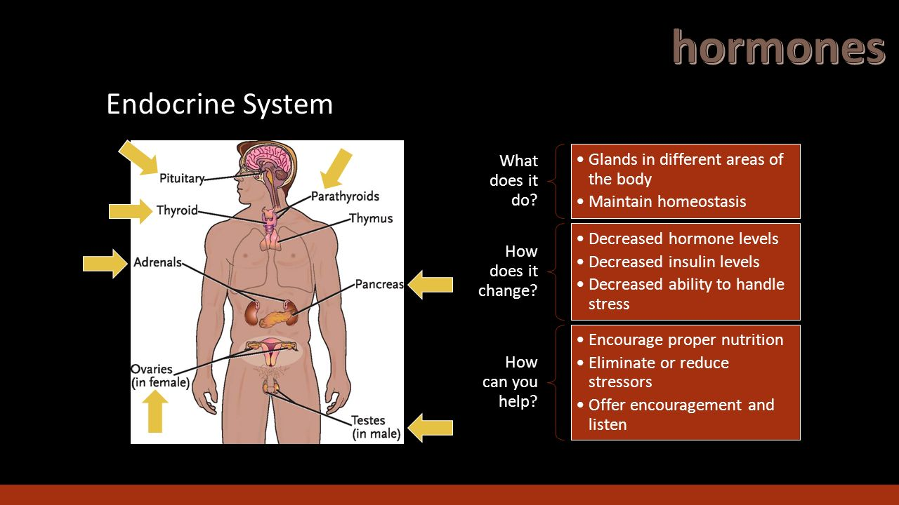 does the glandular system affect behavior The endocrine system is the 2nd great communication system behavior and personality are tied to the ebb and flow of hormones in the body it is made up of a number of glands that pour chemicals (hormones) directly into the bloodsteam.