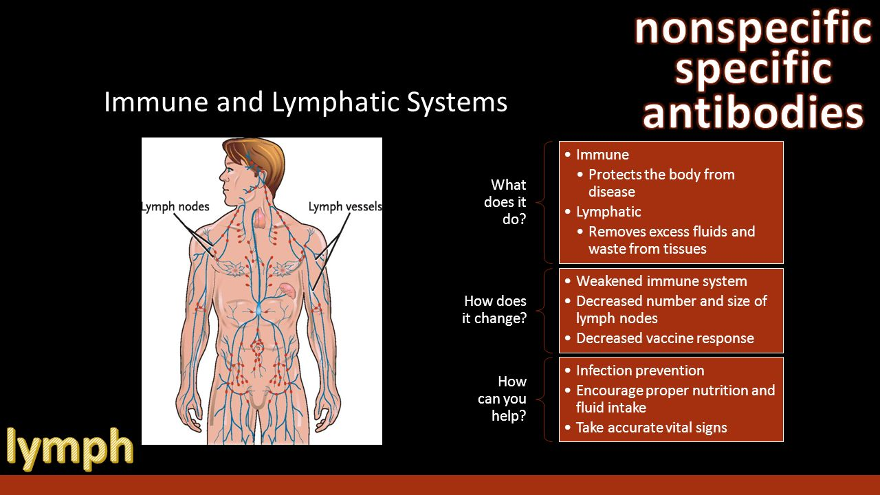 an introduction to the importance of the lymphatic system in the human body The lymphatic system hancock dg (2014) role of lymphatics in immunity - introduction j the lymphatics system has many diverse roles in the human body.