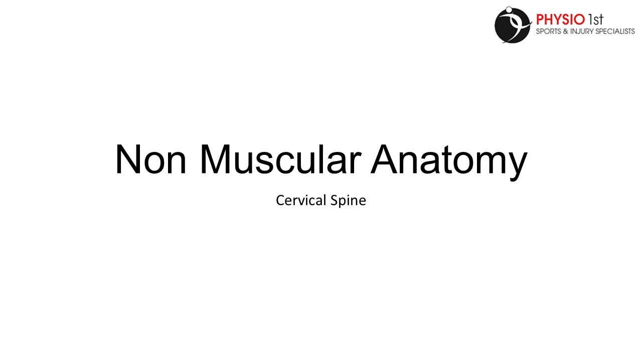 Non Muscular Anatomy Cervical Spine Anatomy The Neck Is Very