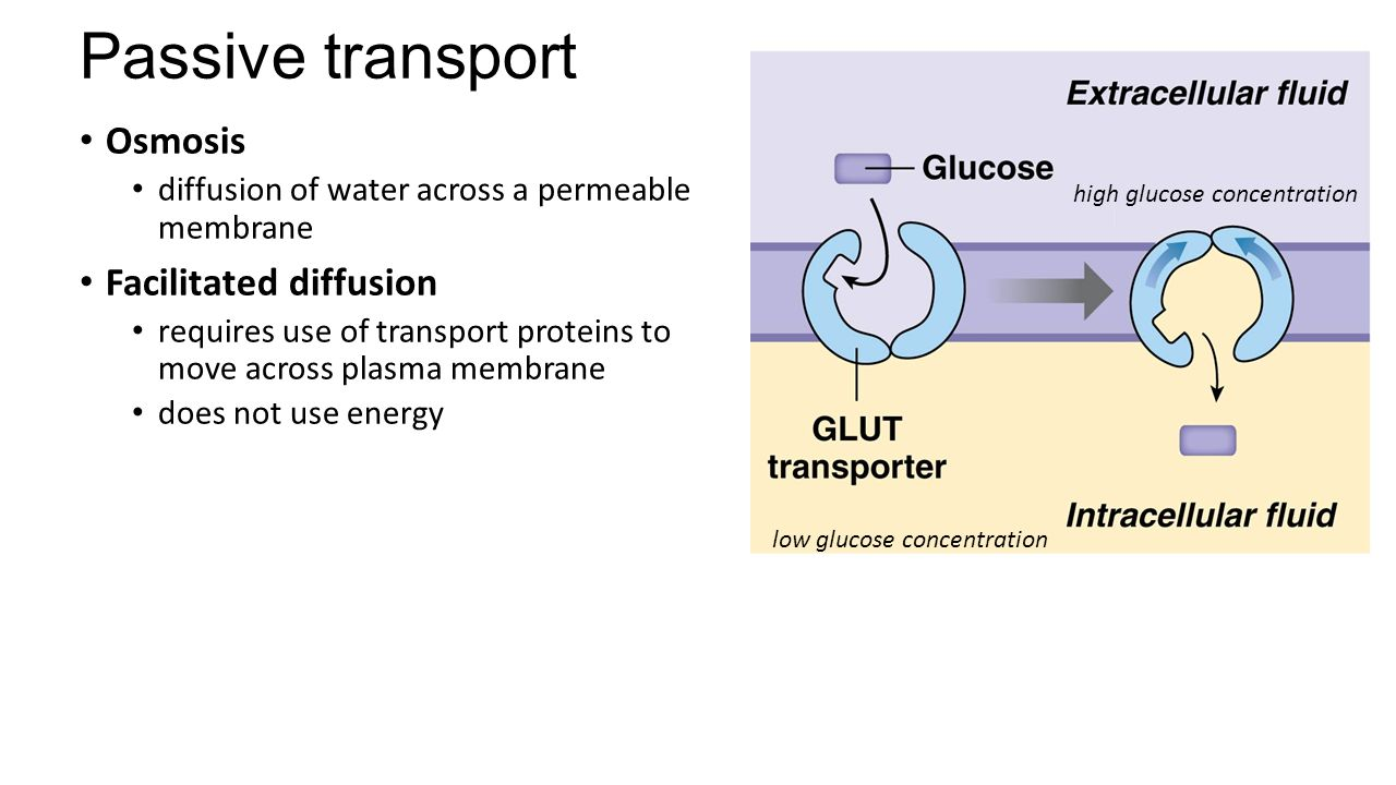 Chapter 2 The Cell: Basic Unit of Structure and Function. - ppt ...