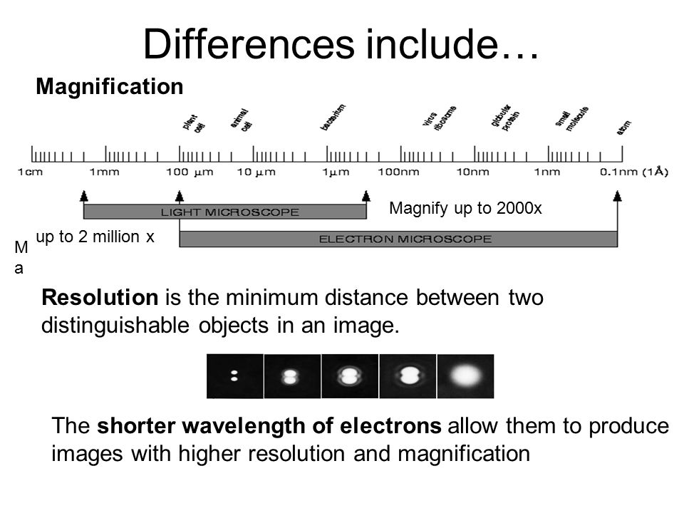 the differences between a light and electron microscope Comparison between light and scanning electron microscopic findings in cells they were stained with riu's a and b solutions and observed with a light microscope.