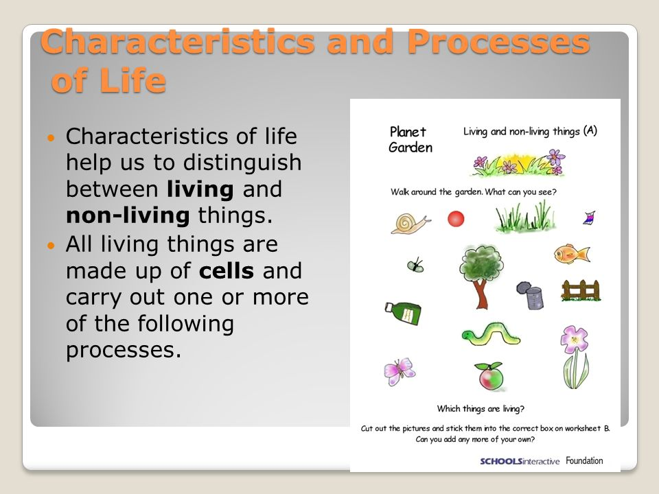 Characteristics of life worksheet biology junction answers