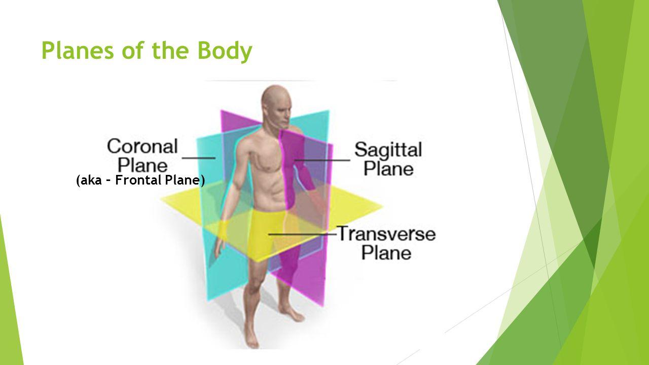 Body planes anatomy