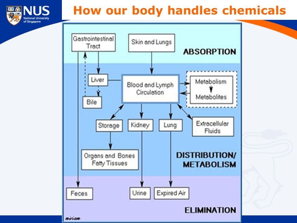 How our body handles chemicals