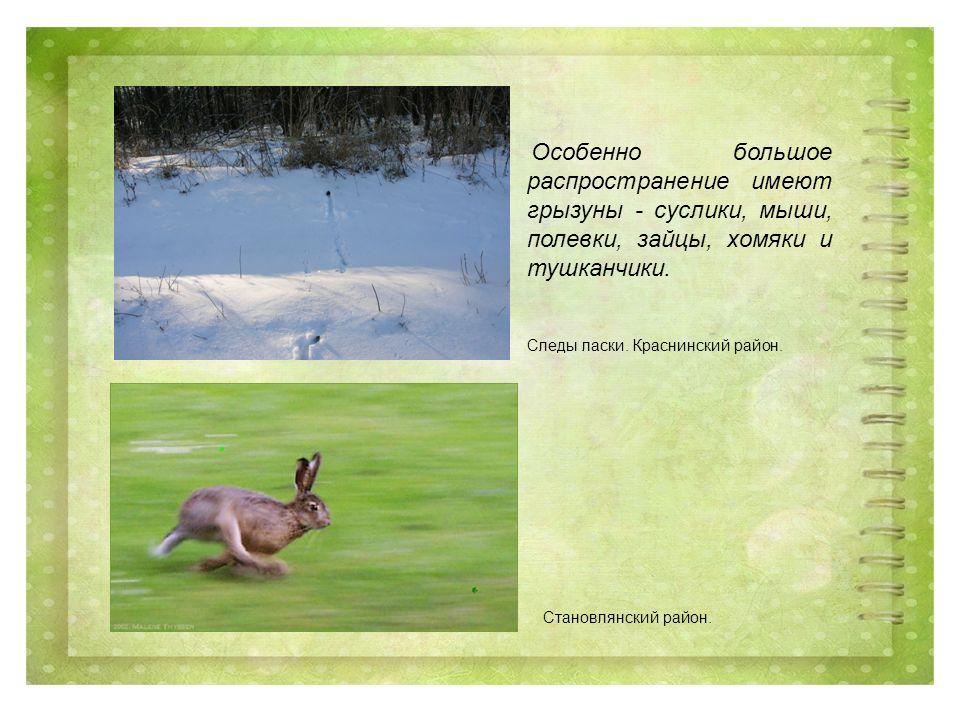 Особенно большое распространение имеют грызуны - суслики, мыши, полевки, зайцы, хомяки и тушканчики.