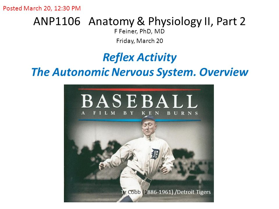 ANP1106 Anatomy & Physiology II, Part 2 F Feiner, PhD, MD Friday ...