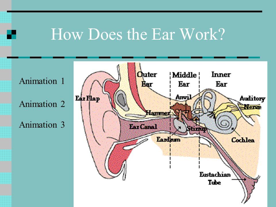 How The Ear Works Animation Erkalnathandedecker