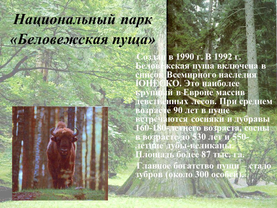 Национальный парк «Беловежская пуща» Создан в 1990 г.