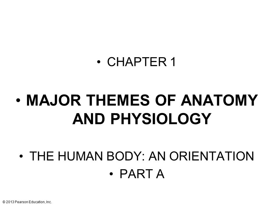 Großartig Anatomy And Physiology Chapter 1 The Human Body An ...