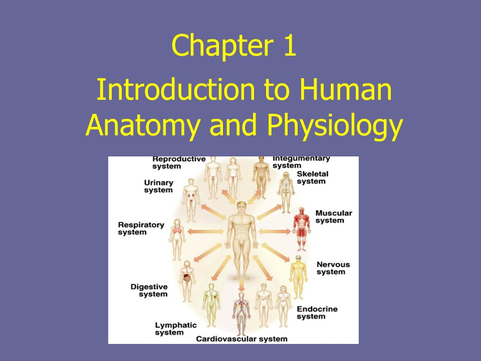 Charmant Chapter 1 Human Anatomy And Physiology Ideen - Menschliche ...