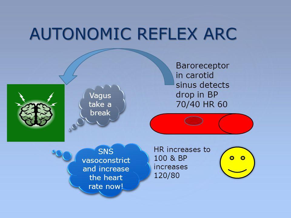 Autonomic nervous system inti university tay ju lee md ppt download 18 autonomic reflex arc baroreceptor in carotid sinus ccuart Gallery