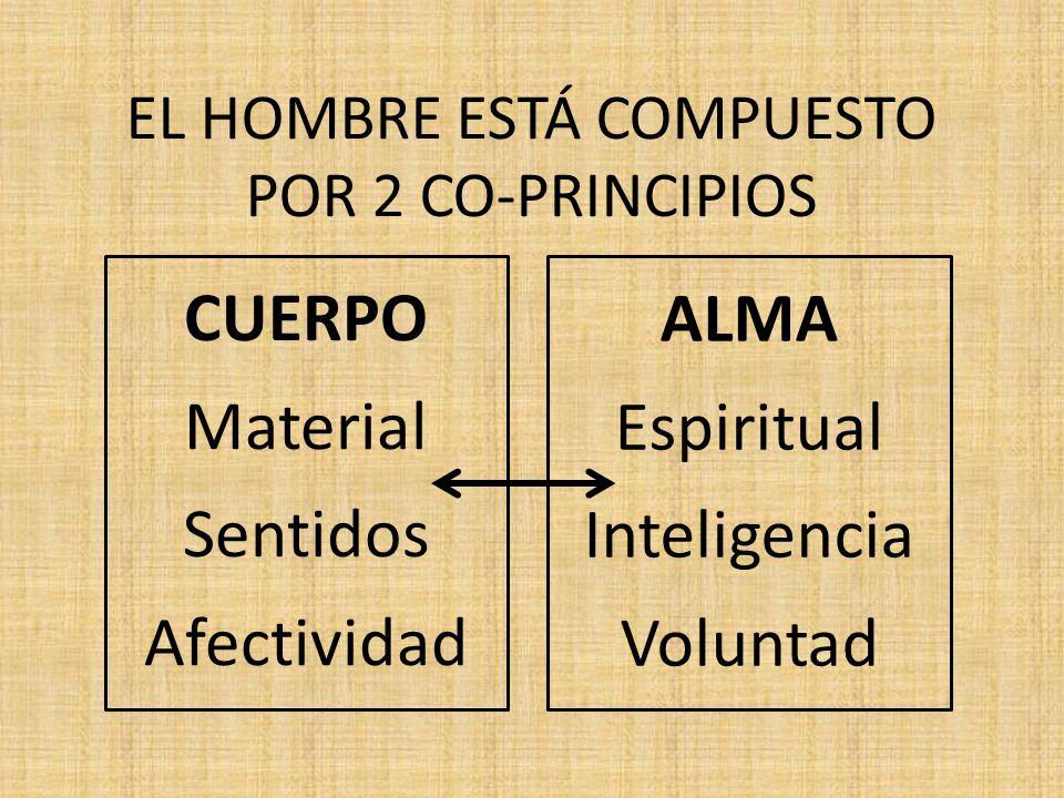 EL HOMBRE ESTÁ COMPUESTO POR 2 CO-PRINCIPIOS CUERPO Material Sentidos Afectividad ALMA Espiritual Inteligencia Voluntad