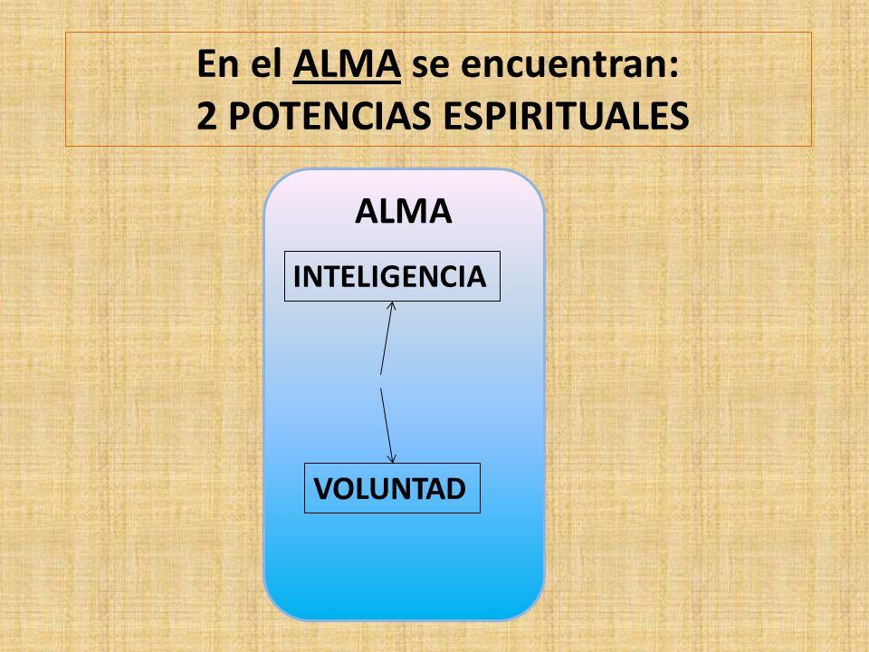 En el ALMA se encuentran: 2 POTENCIAS ESPIRITUALES ALMA INTELIGENCIA VOLUNTAD