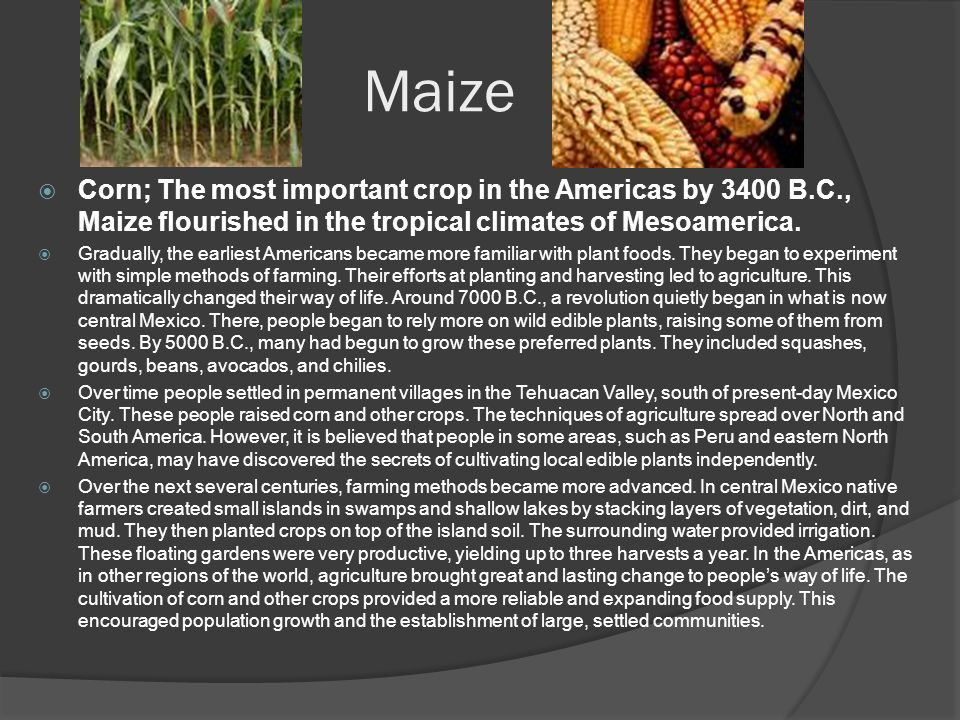 Maize  Corn; The most important crop in the Americas by 3400 B.C., Maize flourished in the tropical climates of Mesoamerica.