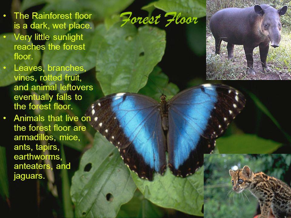 10 Forest Floor ...