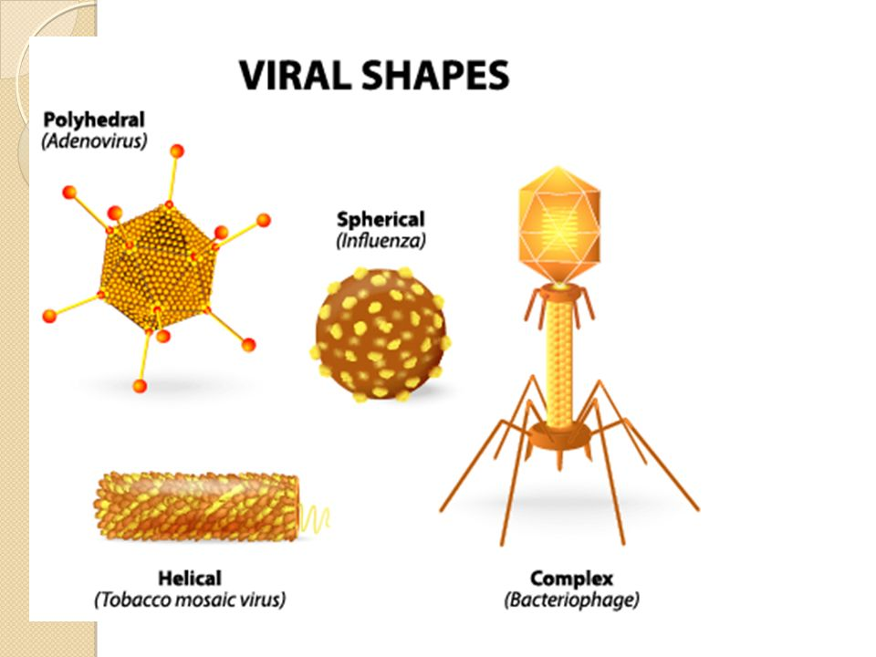an analysis on different viruses and our bodys defenses in virus invaders by alan e nourse md Click to read more about the virus invaders (venture book) by alan edward nourse librarything is a cataloging and social networking site for booklovers.