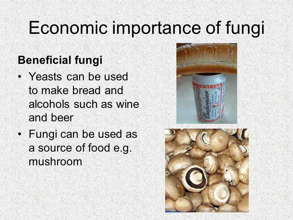 why fungus can be very beneficial to us Five common ways that toenails change as we it can even be beneficial for those who have a a problem like a toenail fungus with age, nails can turn a.