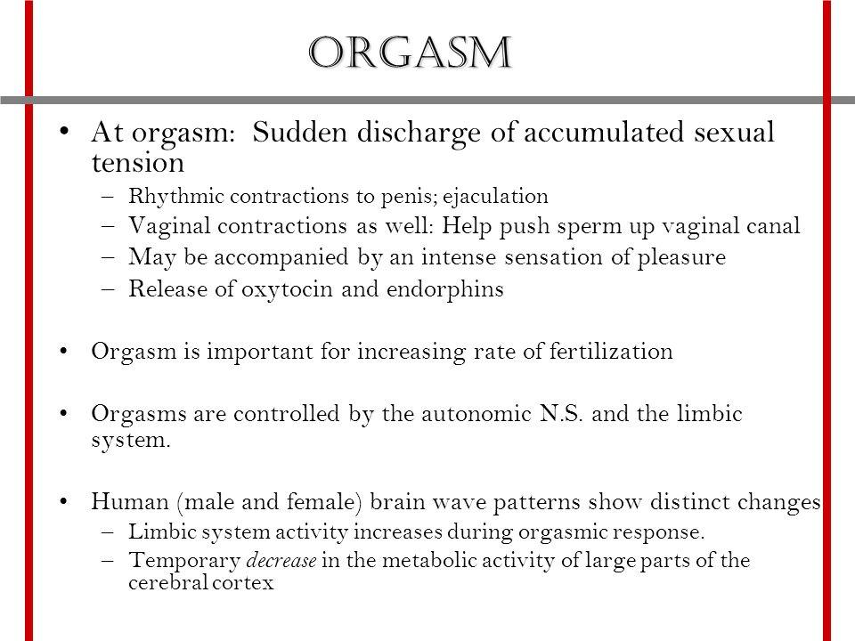 Brain wave during orgasm