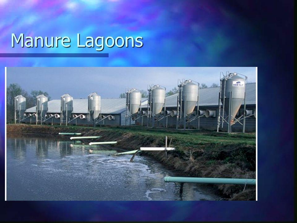 Manure Lagoons
