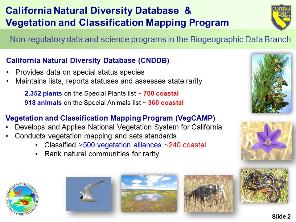 California Natural Diversity Database & Vegetation and Classification Mapping Program 2,352 plants on the Special Plants list ~ 700 coastal 918 animals on the Special Animals list ~ 360 coastal Non-regulatory data and science programs in the Biogeographic Data Branch Provides data on special status species Maintains lists, reports statuses and assesses state rarity California Natural Diversity Database (CNDDB) Vegetation and Classification Mapping Program (VegCAMP) Develops and Applies National Vegetation System for California Conducts vegetation mapping and sets standards Classified >500 vegetation alliances ~240 coastal Rank natural communities for rarity Slide 2