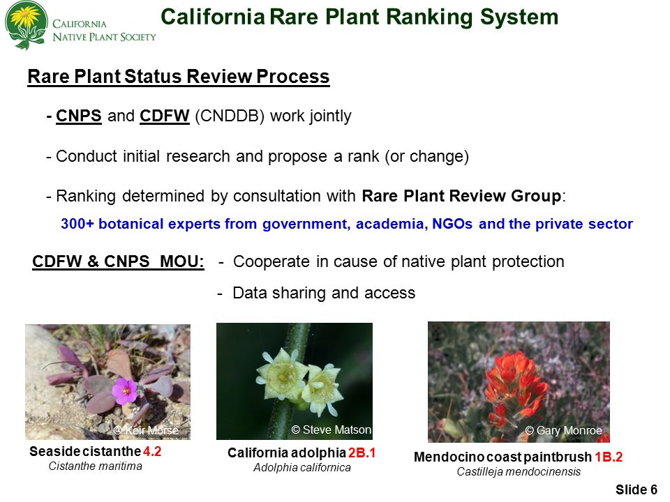 California Rare Plant Ranking System Rare Plant Status Review Process - CNPS and CDFW (CNDDB) work jointly - Conduct initial research and propose a rank (or change) - Ranking determined by consultation with Rare Plant Review Group: 300+ botanical experts from government, academia, NGOs and the private sector CDFW & CNPS MOU: - Cooperate in cause of native plant protection - Data sharing and access Seaside cistanthe 4.2 Cistanthe maritima © Keir Morse California adolphia 2B.1 Adolphia californica Mendocino coast paintbrush 1B.2 Castilleja mendocinensis © Gary Monroe © Steve Matson Slide 6