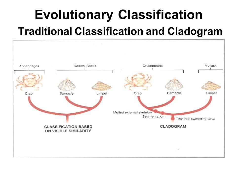 Evolutionary Classification Traditional Classification and Cladogram