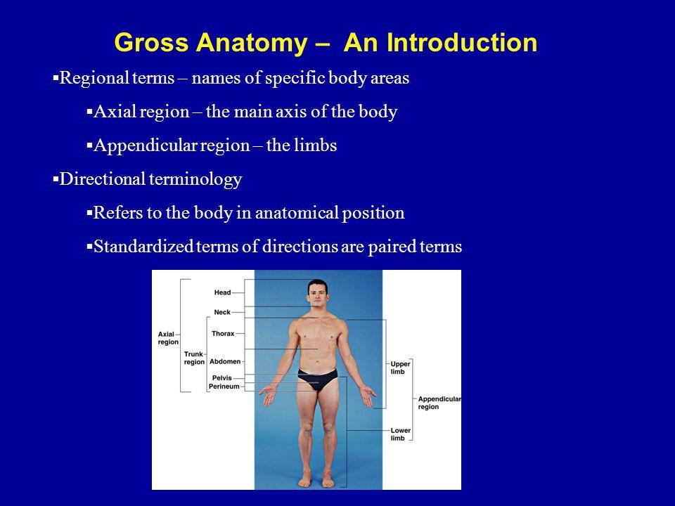 Directional terms human anatomy