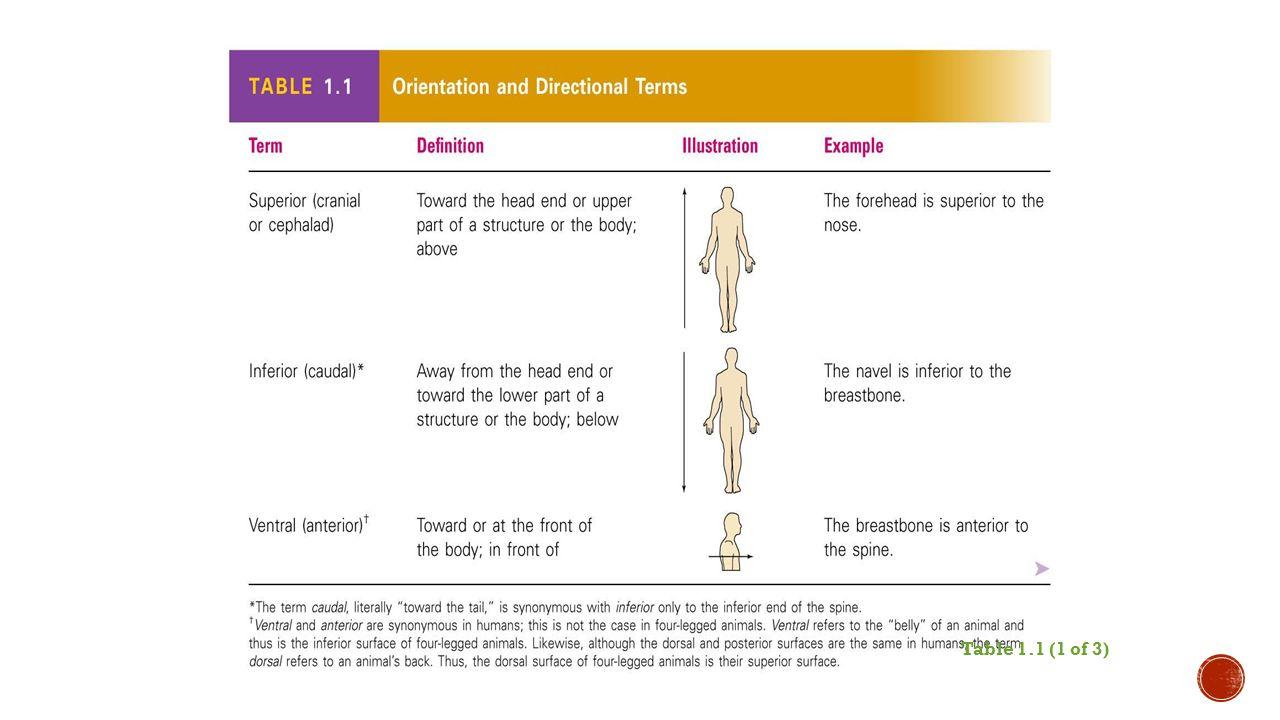 Gross anatomy definition 2053149 - togelmaya.info