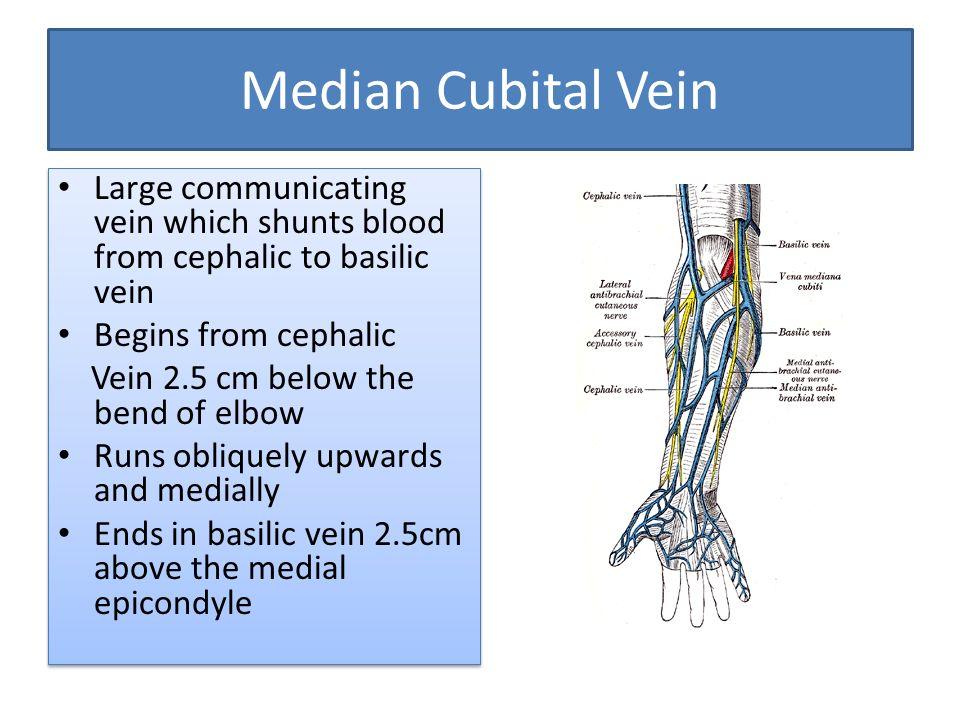 venous and lymphatic drainage of upper limb dr anita rani, Human Body