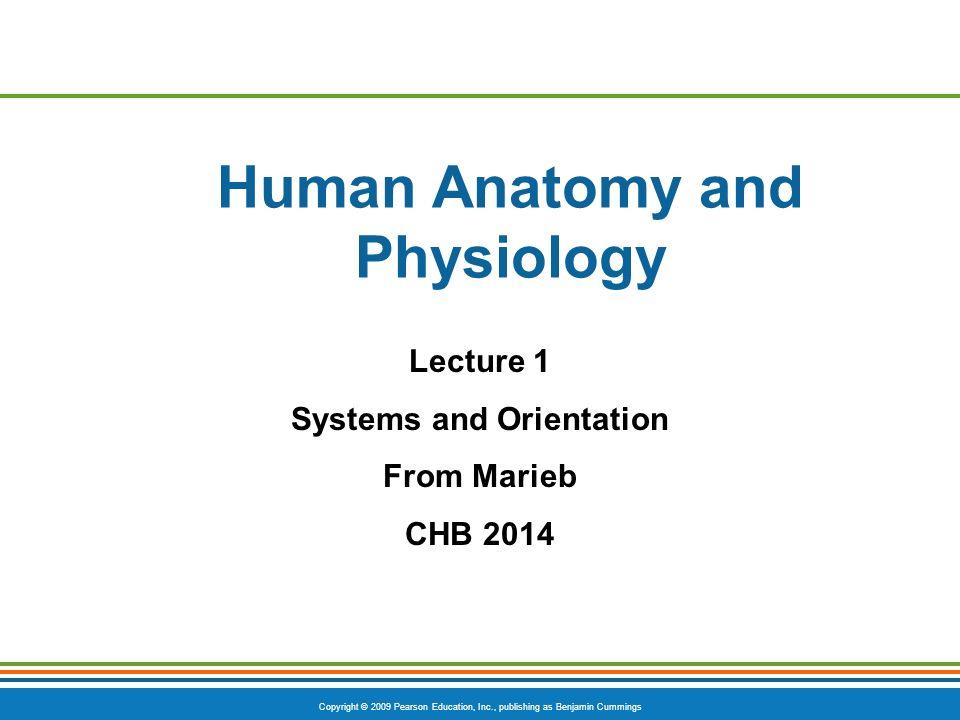 Ungewöhnlich Anatomy And Physiology Lectures Mp3 Fotos - Menschliche ...