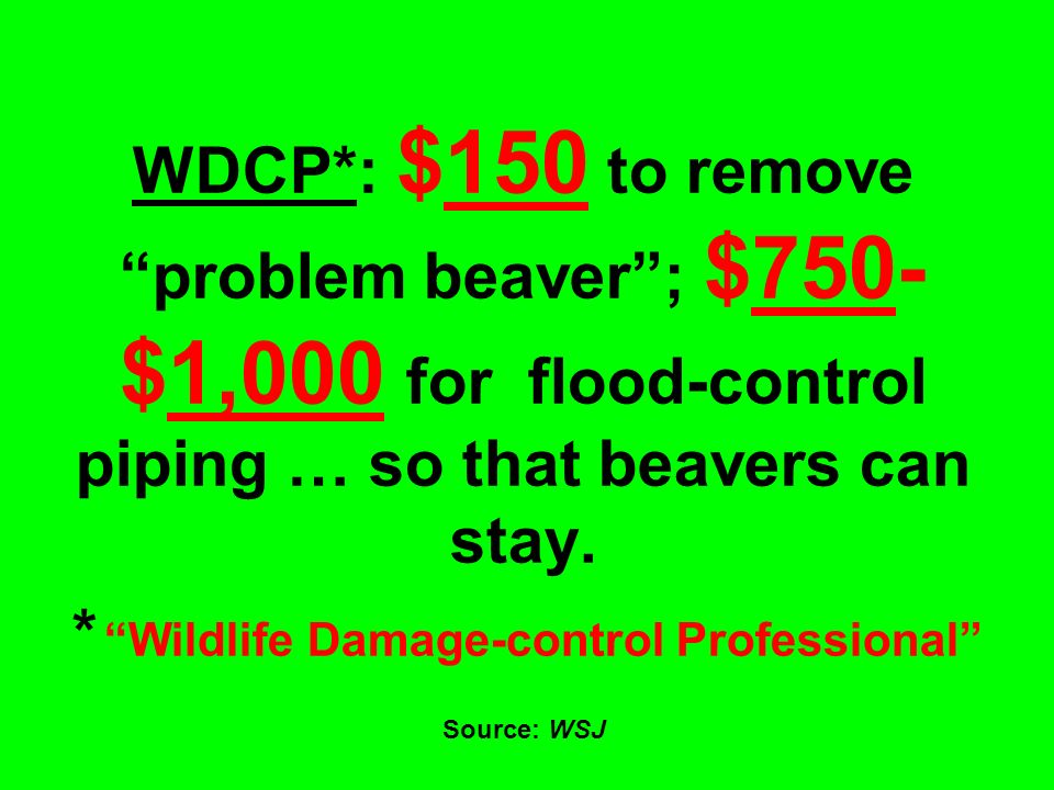 WDCP*: $150 to remove problem beaver ; $750- $1,000 for flood-control piping … so that beavers can stay.