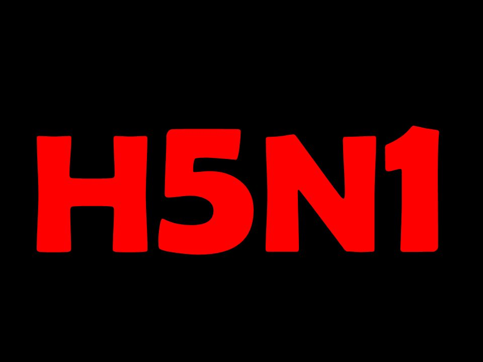 H5N1H5N1