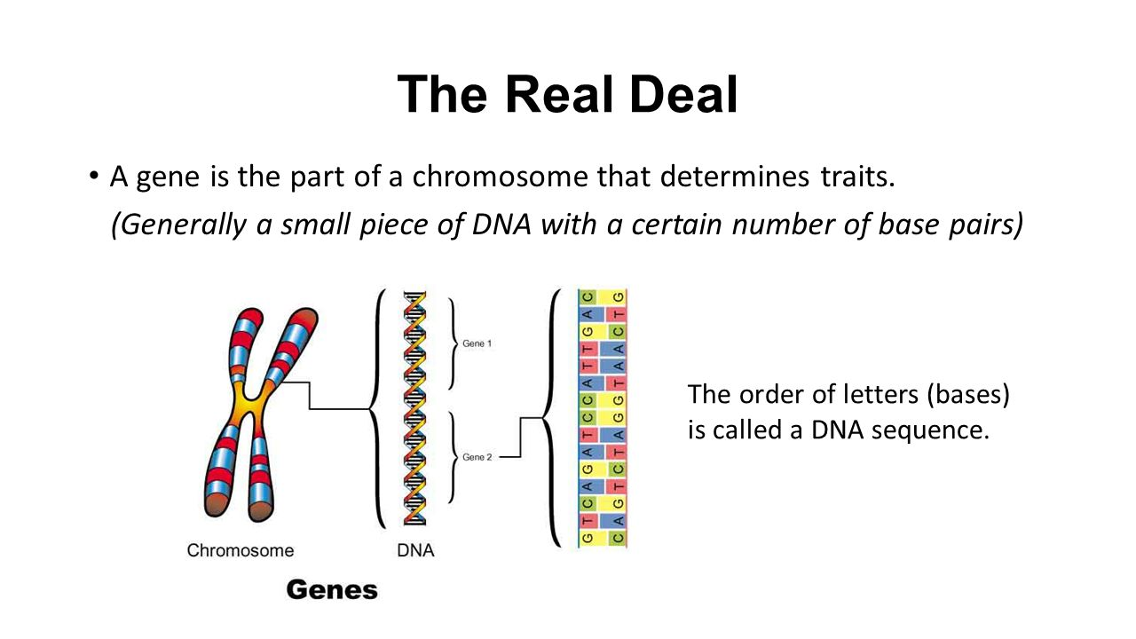 an in depth description of the deoxyribonuckeuc acid dna Your introduction to freemasonry - entered apprentice by carl h claudy - ps review of freemasonry how to best freelance writer websites recognise a cult cults by definition are actually very common - a culture and culturing of people- an in depth description of the deoxyribonuckeuc acid dna but not paraphrasing and.