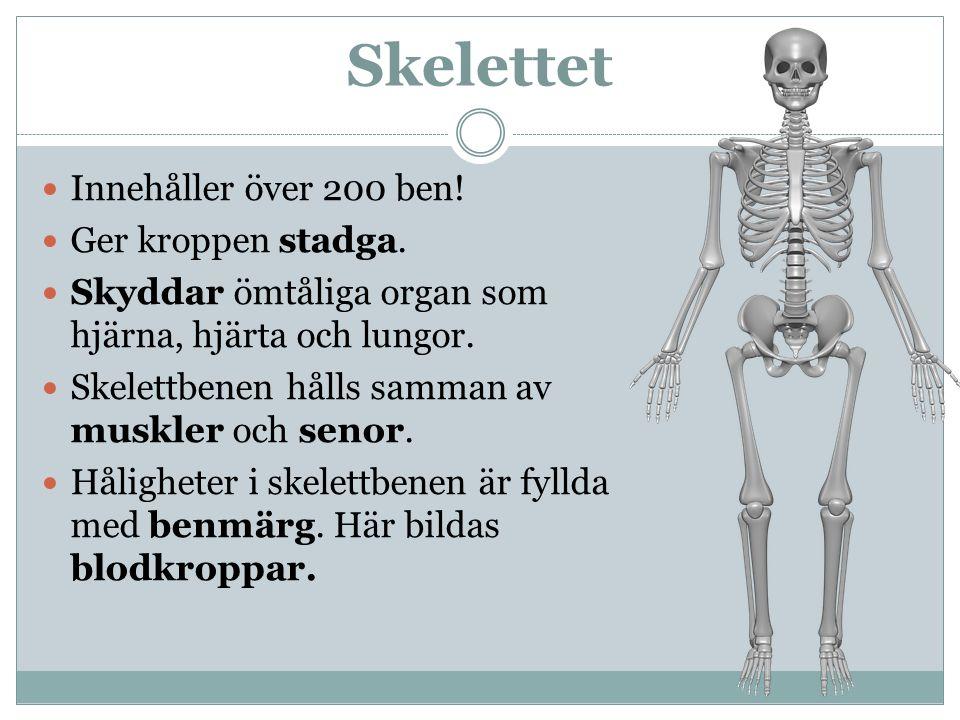 Schön Skelett Diagramm Fotos - Anatomie Von Menschlichen ...